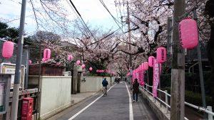 染井稲荷神社 桜並木