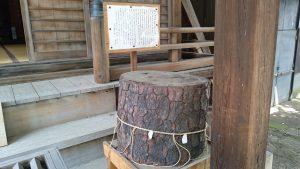 八景天祖神社 (神明山天祖神社)  義家鎧かけの松(切り株)