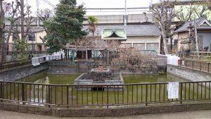 鮫洲八幡神社 神池
