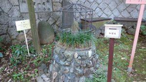 西台天祖神社 おしわぶき様(しゃぶき様)