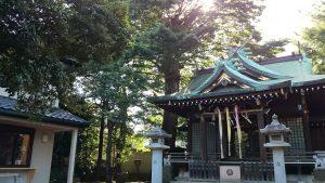 中台稲荷神社 ムクの木