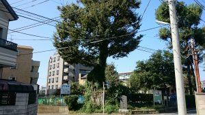 赤塚氷川神社 赤塚乳房大神・樹齢1750年の欅