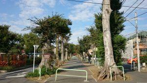 赤塚氷川神社 参道