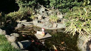 櫻木神社(野田市) 神池