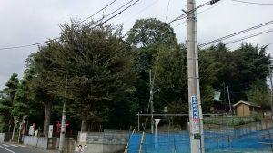 高松八幡神社 社叢