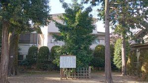 志茂熊野神社 御神木の梛