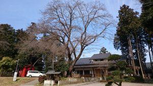 二宮神社(小河大明神) 御神木と荒波々伎神社
