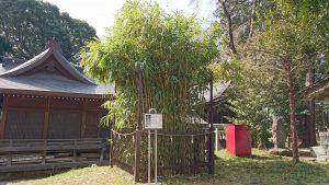 二宮神社(小河大明神) 筒粥の篠竹
