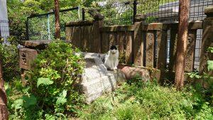 東山稲荷神社(東山藤稲荷神社) 神社猫