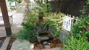 葛飾八幡宮 蹲(つくばい)