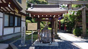 葛飾氷川神社 区指定天然記念物「氷川神社のクロガネモチ」