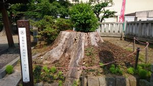 有鹿神社 本宮 欅根花壇